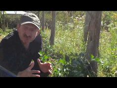 Țelină de rădăcină - YouTube Mens Sunglasses, Gardening, Youtube, Style, Swag, Lawn And Garden, Men's Sunglasses, Youtubers, Outfits