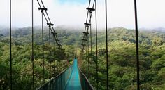 Costa Rica, Air, Car, 5 Nights, From $789.  #budgettravel #travel #deals #traveldeals #packages #CostaRica #Monteverde #CloudForest #forest #nature #Arenal #Volcanoes #SanJose #roadtrips #rentalcar #scenicdrives #drives #CentralAmerica #CapricornLeisure #tours #jungle Visit BudgetTravel.com for more travel deals.