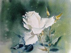 К. Стерхов. Белая роза.