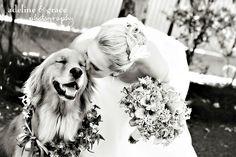chien-mariage-bisous - Les chiens, invités au mariage - Demoiselle capeline wedding planner Bretagne