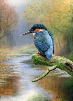 www.baronfineart.co.uk Gallery image_links nigelartingstall nigel_artingstall_kingfisher.jpg