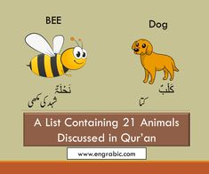 21 Animals Mentioned in Quran Learn Quran, Holy Quran, Dog Names, Pet Birds, Winnie The Pooh, Verses, Insects, Lion