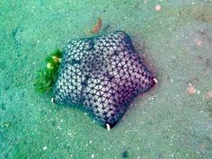 another pic of a cushion star