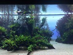 #florestassunmersas #ADAIberica #YagoAlonso #Lisboa #aquarium