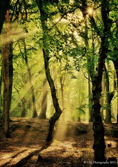 Sunlit woods | by GB's photography