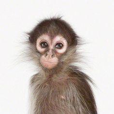 Monkey trouble.