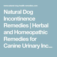 Natural Dog Incontinence Remedies | Herbal and Homeopathic Remedies for Canine Urinary Incontinence