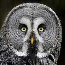 OWLS - Buscar con Google