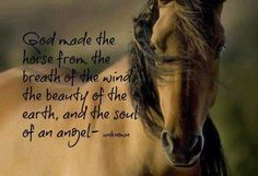 God made the horse from the breath of the wind, the beauty of the earth, and the soul of an angel.