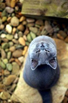 Grey cat. Beautiful angle