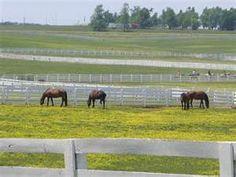 I can't wait to go back. Kentucky Horse Park, Horses, World, Places, Travel, Beautiful, Usa, Viajes, Destinations