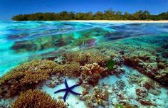 The great barrier reef