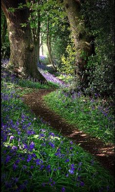 Pretty photo of a nature walking trail with purple flowers in a peaceful forest in Derbyshire, England by Matt Oliver photography. Beautiful World, Beautiful Places, Beautiful Forest, Magical Forest, Walk In The Woods, Into The Woods, Belle Photo, Beautiful Landscapes, The Great Outdoors