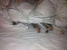 <p>Ich finde, es ist ein Fehler, Hunde im Bett schlafen zu lassen. Wirklich. Aber nicht aus den Gründen, die Sie sich jetzt denken. Mir geht es nicht um Schmutz im Bett. Kleine Sandhaufen im Bett kann man sich auch als eine Art natürliches Peeling schön reden, und das Gefühl von …</p>