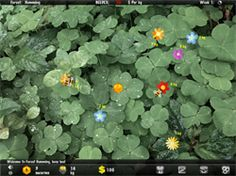 Bee Farming iPad App - Reviewed & Recommended
