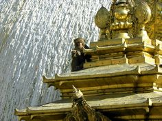 monkey, Swayambhunath Temple or Monkey Temple - Kathmandu, Nepal