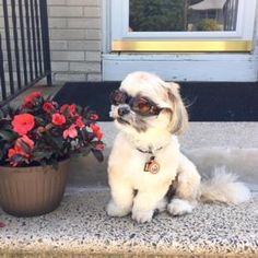 Max all ready in his Doggles just waiting for his ride.