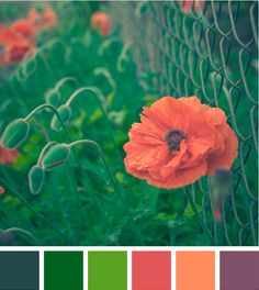 """Yet another lovely palette constructed by designworklife from the image """"Poppy stalking"""" by heavenly~flower."""