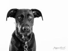 """Ohren und Augen nach vorne bei den Fotos Nicht nur du kannst bei deinem Fotoshooting in die Kamera schauen. Der Blick und die Aufmerksamkeit deines Hunde sollte auf die Kamera gerichtet sein. Dies kann erreicht werden mit Leckerlis, einem Spiegel oder einem Spielzeug. Diese Möglichkeiten sind bekannt, aber es geht so viel mehr. Lies dir meinen Beitrag durch und lerne einige Möglichkeiten kennen, wie du deinen Hund zum """"schön dreinschauen"""" bewegen kannst. World, Dogs, Animals, Dog Owners, Ears, Camera, Photo Shoot, Mirrors, Clearance Toys"""