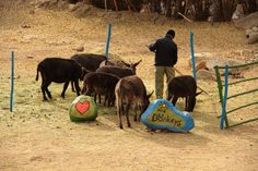 Donkey Sanctuary. A great way of doing something very simple. Sensitive, artistic and nice. Learn more: http://donkeysanctuary.in/ Courtesy: Joe Athialy, New Delhi (India)