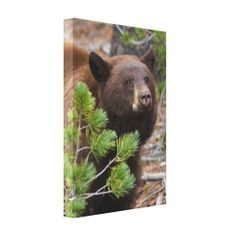 ==> reviews          	Black Bear with Blond Color Stretched Canvas Prints           	Black Bear with Blond Color Stretched Canvas Prints Yes I can say you are on right site we just collected best shopping store that haveDeals          	Black Bear with Blond Color Stretched Canvas Prints Review...Cleck Hot Deals >>> http://www.zazzle.com/black_bear_with_blond_color_canvas-192563302222540397?rf=238627982471231924&zbar=1&tc=terrest