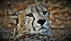 the wonderful animal world / le merveilleux monde animal by LuisSobral1