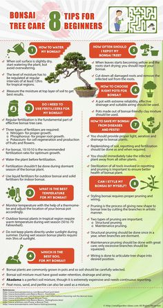 Bonsai Tree Care Tips for Beginners Infographic #gardening