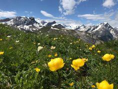 #FeelTheLove #lenk #lenkimsimmental #meineberge #sichergömeridbärge #lenkerhof #nature #flowers #mountain #hiking Mountains, Nature, Travel, Naturaleza, Viajes, Trips, Nature Illustration, Outdoors, Traveling