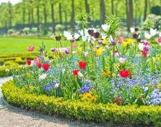 Клумба непрерывного цветения: сроки посева цветов в таблицах