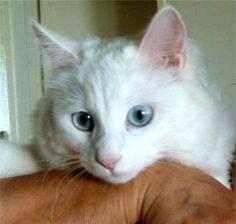 My cat Zofia. Iris, Phoenix, AZ - 6/28/2015
