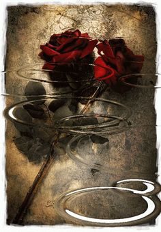 GIFS Animados | Rosas de Color Rojo - 1000 Gifs - Los Mejores Gifs Animados para Compartir