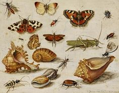 Jan van Kessel  Insects, Butterflies and Shells  1659  VERY strage combination!