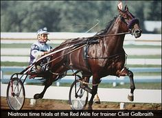 Deweycheatumnhowe and Somebeachsomewhere elected to Living Hall of Fame - Harness Racing Newsroom - USTA - USTROTTING. Pic of Somebeachsomewhere, the 2008 Horse of the Year in Canada and US for Harness racing. Dressage, Standardbred Racing, Canadian Horse, Harness Racing, Horse And Buggy, Racehorse, Draft Horses, Horse Farms, Horses