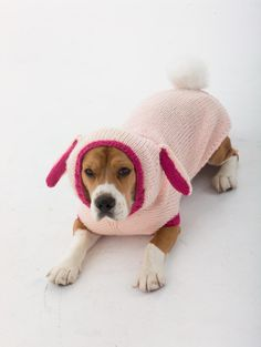 Knit Bunny Dog Costume for the family pet and have them help your child find those magical Easter eggs!