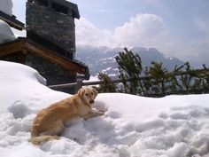 BLOG: Dog Friendly Ski Chalets! #ski #skiing #luxury #travel #luxurytravel #mountains #snow #chalet #dog #animallover #alps #blog