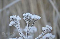 http://www.pienilintu.blogspot.fi/2014/01/frost-everywhere.html