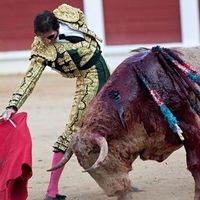 UNESCO International: Spanish bullfighting is not a World Heritage Site UNESCO International: Spanischer Stierkampf ist kein Weltkulturerbe