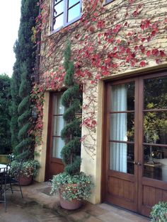 Love the ivy growing up the stucco wall, with cypress trees in pots with the cascading ivy!  So warm, relaxed and elegant.  Inviting!