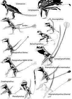 Pterosaur Tail Vane Evolution