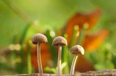 """""""Three little mushrooms"""" by Yani Dubin https://gurushots.com/yani.dubin/photos?tc=2f714573798c4445d3810149174a9e47"""