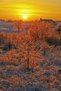 Wintery sunrise, Scott County, Kentucky