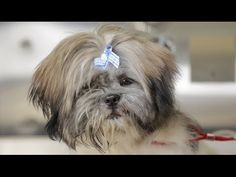 ▶ Homeless Dog Gets Makeover That Saves His Life! - Joey - YouTube