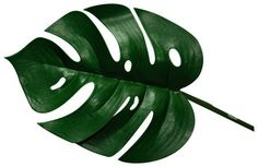 Lucky Reptile Monstera Leaf (3-Pack) - RS Reptile Supplies