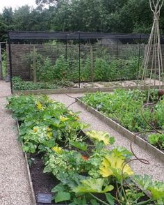 Creating a veg patch is one of the most rewarding experiences, find out the essentials to get you started here.