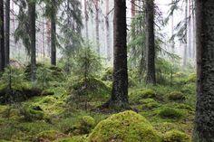 photo skog2_zpsc6c698f8.jpg