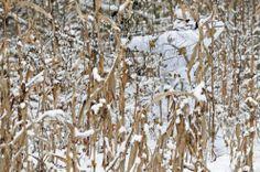 Siete avvertiti, c'è Predator nel bosco: il camouflage è perfetto