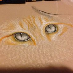 Cat eyes, colored pencils