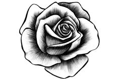 Learn To Draw A Realistic Rose - Drawing On Demand Rose Tattoos, Flower Tattoos, Hand Tattoos, Sleeve Tattoos, Rose Illustration, Design Rosa, Rose Design, Rose Drawing Tattoo, Tattoo Drawings