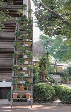love this ladder garden