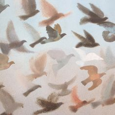 Illustration by Laura Carlin from 'King of the Sky' by Nicola Davies